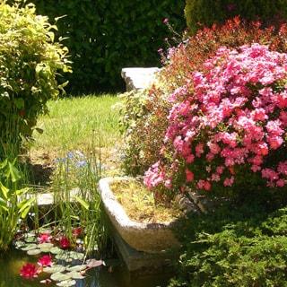 На фото: декоративный прудик с лилиями в окружении цветов, на дальнем плане газон, живая изгородь