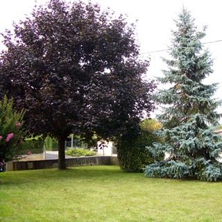 На фото: газон, декоративные деревья, голубая ель, на дальнем плане - выезд на улицу, забор соседнего участка