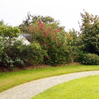На фото: газон с гравийной пешеходной дорожкой, цветущие декоративные растения и кустарники