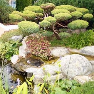 На фото: прудик с текущей водой, ландшафтный дизайн из камней, декоративное карликовое дерево