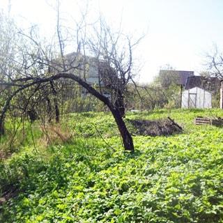 На фото: часть земельного участка, трава, садовые посадки и деревья, теплица, на дальнем плане соседние одноэтажные дома
