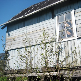 На фото: часть фасада одноэтажного садового дома, обшитого вагонкой, окно, кровля покрыта рубероидом, перед домом - ветки кустарника