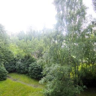 На фото: вид из окна в зеленый двор, деревья, кустарники, газон, пешеходная дорожка