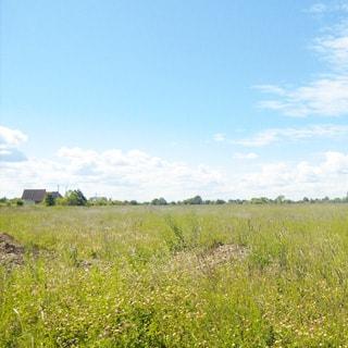 На фото: луговой участок, участок свободный, без построек, не огорожен, вдалеке на заднем плане - жилые постройки и опушка леса
