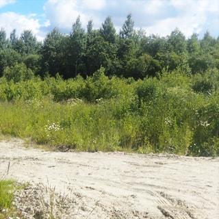 На фото: грунтовая дорога, за ней - опушка леса, деревья лиственных пород, кустарник
