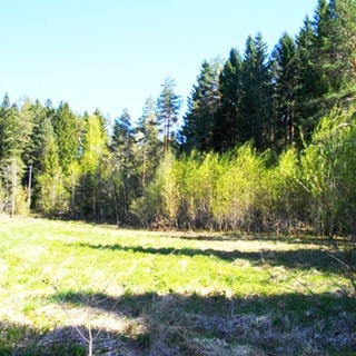 На фото: луговой участок на опушке леса, лес смешанный, участок свободный, без построек, не огорожен