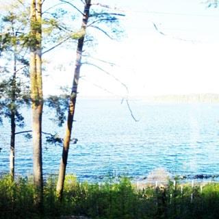 На фото: берег озера, кромка воды, противоположный берег почти не виден, на берегу мелколесье, отдельно стоящие деревья хвойных пород