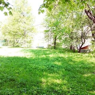 На фото: внутриквартальная территория, свободна, без построек, газон, редкие деревья
