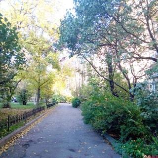 На фото: асфальтированный тротуар, отделен от дома и от проезжей части огороженным газоном с деревьями и кустами.