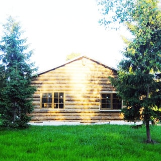 На фото: фронтальная часть фасада одноэтажного индивидуального жилого дома из тесаного бревна, двускатная пологая кровля, два больших двустворчатых окна, пред домом - газон, высажены хвойные и лиственные деревья