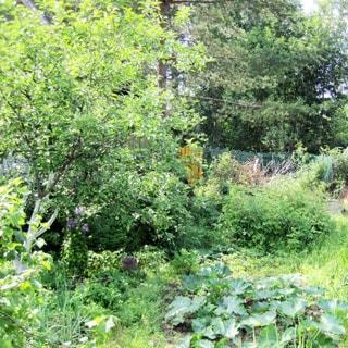 Садовый дом 44 кв.м на 6 сотках в Новом Токсово (Всеволожский) продается. Участок - высокий, на склоне, разработан, огорожен