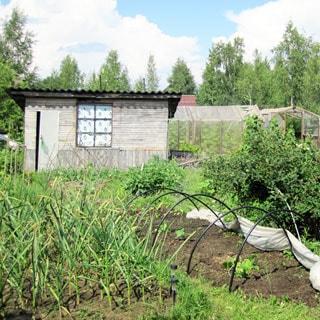 Садовый дом 44 кв.м на 6 сотках в Новом Токсово (Всеволожский) продается. На участке - времянка, огород, садовые посадки, яблони