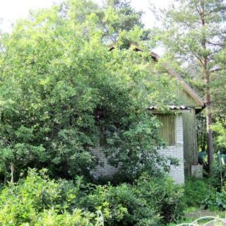 Садовый дом 44 кв.м на 6 сотках в Новом Токсово (Всеволожский) продается. Летом дом утопает в зелени