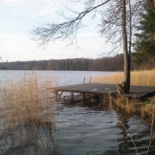 Земельный участок 10 соток САД в районе озера Сарженское (Всеволожский) продается. Берег Сарженского озера - 200 метров