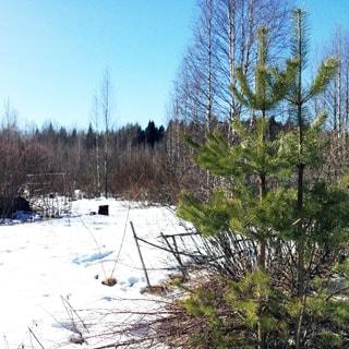 Земельный участок 8 соток САД в поселке Кравцово (Выборгский) продается. Участок - крайний, есть возможность прирезки