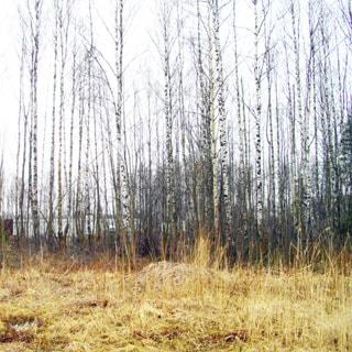 Земельный участок 12 соток ИЖС в Осиновой Роще (Выборгский, МО Парголово) продается. Участок - ровный, не разработан, не огорожен, без построек