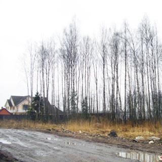 Земельный участок 12 соток ИЖС в Осиновой Роще (Выборгский, МО Парголово) продается. Подъезд - асфальт, грунт (100 м до асфальта)