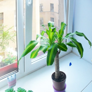 На фото: окно со стеклопакетом, на подоконнике пальма в цветочном горшке, за окном - стена дома напротив