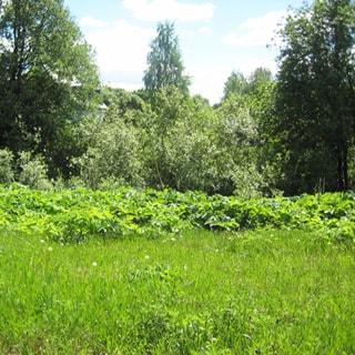 На фото: земельный участок, на переднем плане - луговая растительность, на заднем - деревья, кустарник
