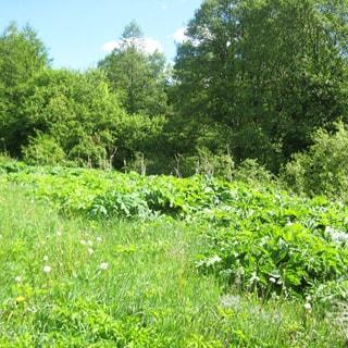 На фото: земельный участок, на переднем плане - луговая растительность, на заднем - небольшой уклон к ручью, кустарник, деревья