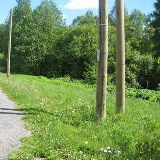 На фото: земельный участок, по границе участка вдоль дороги проходит ВЛЭП на деревянных столбах