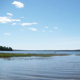 На фото: вид на озеро с берега, на переднем плане - мелководье с порослью тростника, на дальнем - большая вода, по берегам - лес
