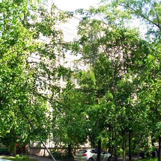 На фото: часть фасада 9-этажного панельного дома со стороны двора, на переднем плане - деревья, придомовой проезд с припаркованными автомобилями