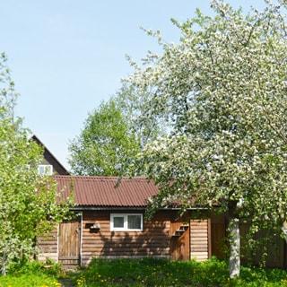 На фото: одноэтажная деревянная постройка - баня, на переднем плане - яблоня в цвету