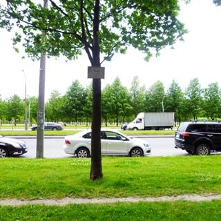 На фото: проезжая часть улицы с припаркованными у обочины легковыми автомобилями, разделительная полоса - газон, обочина на перднем плане - газон с деревьями, обочина на заднем плане - газон, деревья, парковая зона
